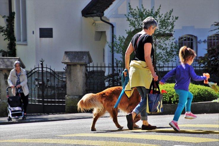 Chiens en ville : bonnes pratiques des maitres